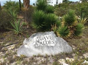 BP Agave & Aloes