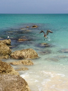 pelicanbeach