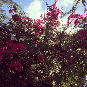 bightflowers