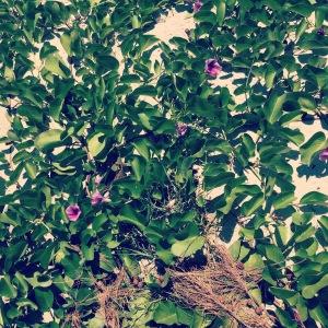 bluehillsbeachgreenclose
