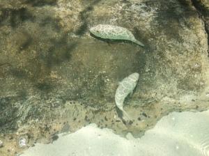 taylorbayfish3