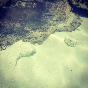 taylorbayfish2